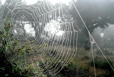 tela de araña 2