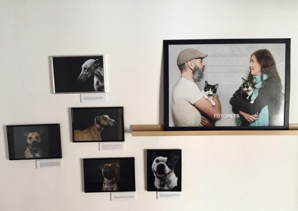 Fotopets y sus retratos invisibles